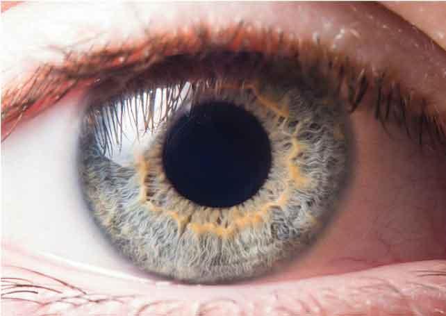 ענבי טלי- בריאות העיניים