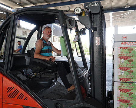 העמסת פרי למשאית
