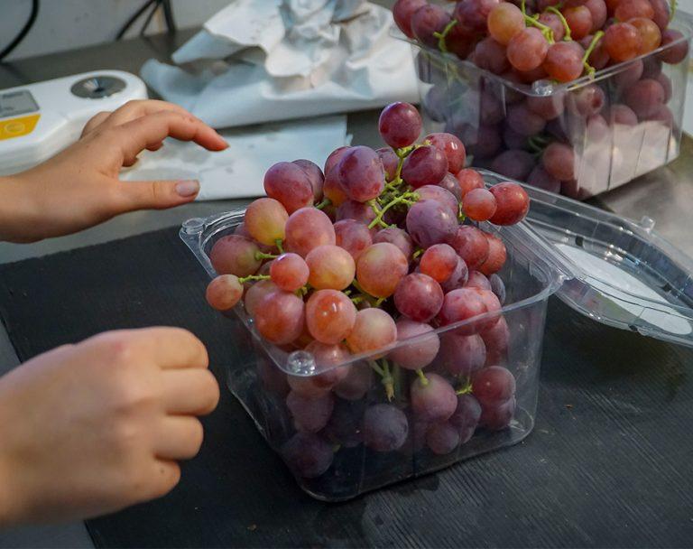 בדיקת איכות הענבים