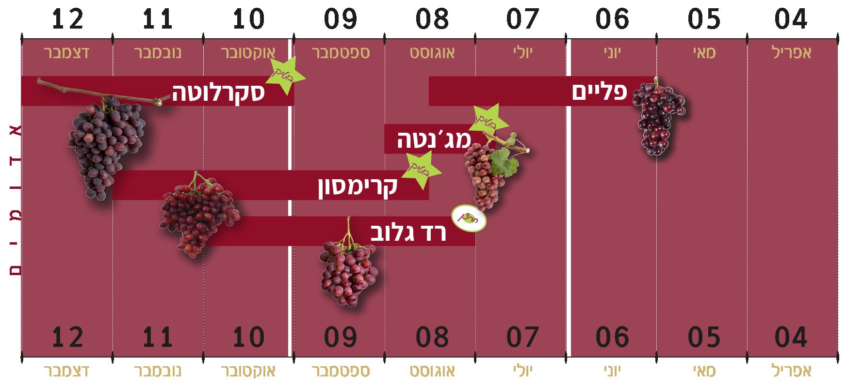 זני הענבים האדומים של ענבי טלי