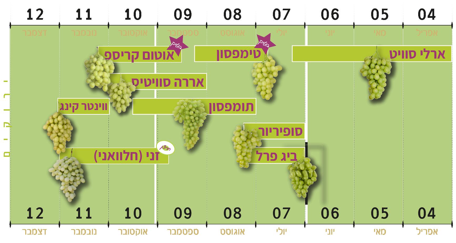 ענבי טלי זנים ירוקים