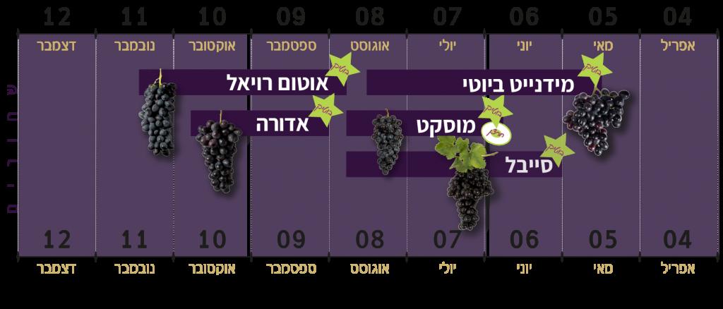 זני הענבים השחורים של ענבי טלי
